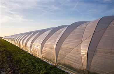 AddWorks® AGC for Agricultural films offers a range of solutions to fulfill the requirements of mulch, silage or Greenhouse film applications. (Photo: Clariant)